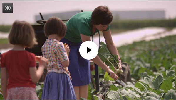 één reportage over biologische oogsttuin