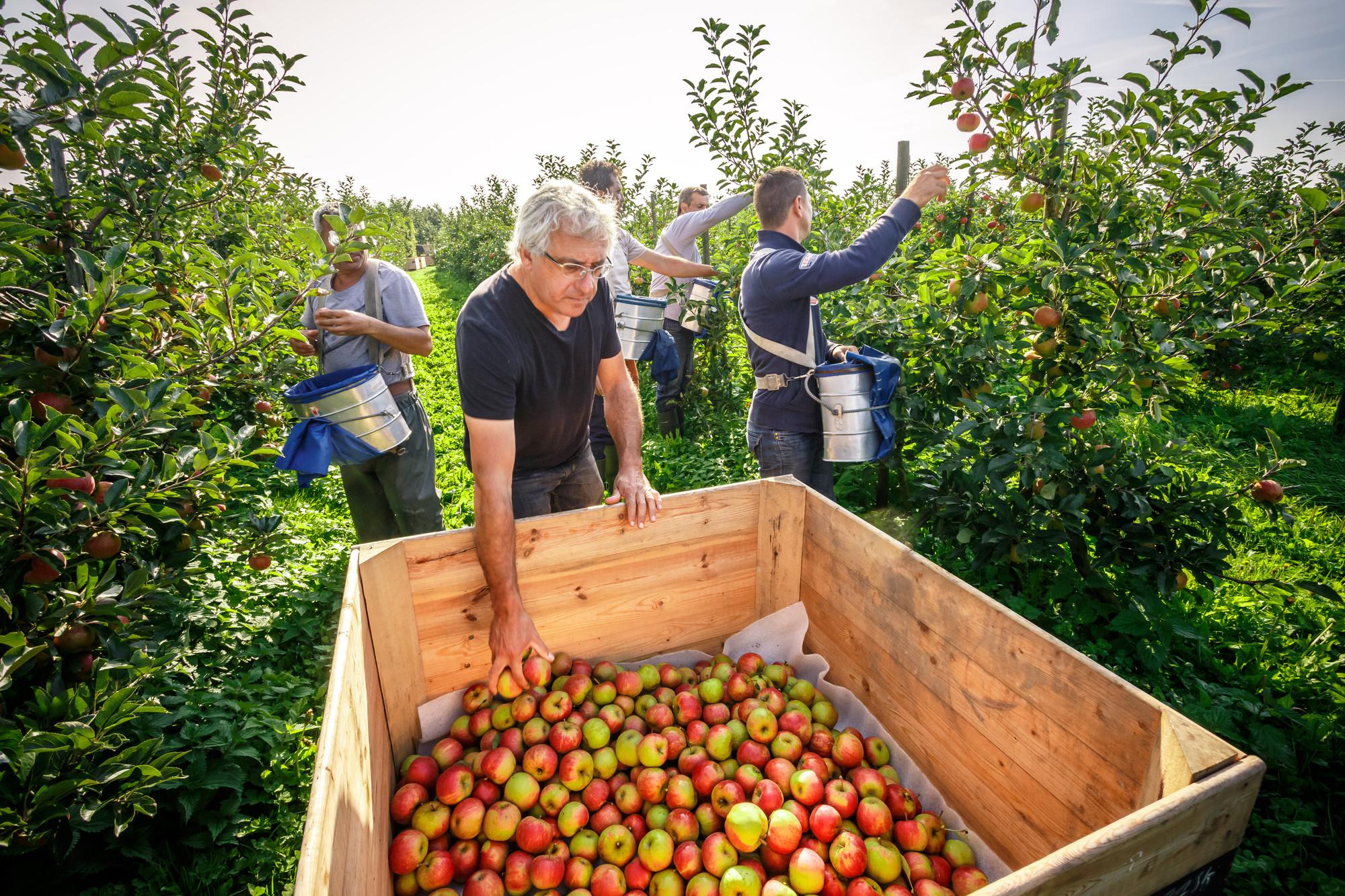 Van eykeren bio appel bio mijn natuur.jpg