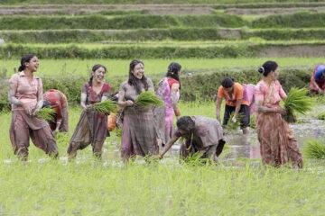 20180605 Sikkim Farming