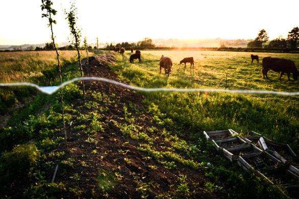 2019 06 17 Agroforestry Delhaye