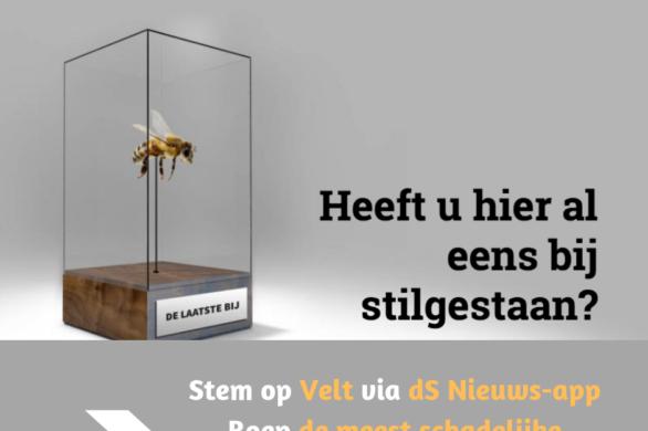 2019 08 Velt Stem Bijen