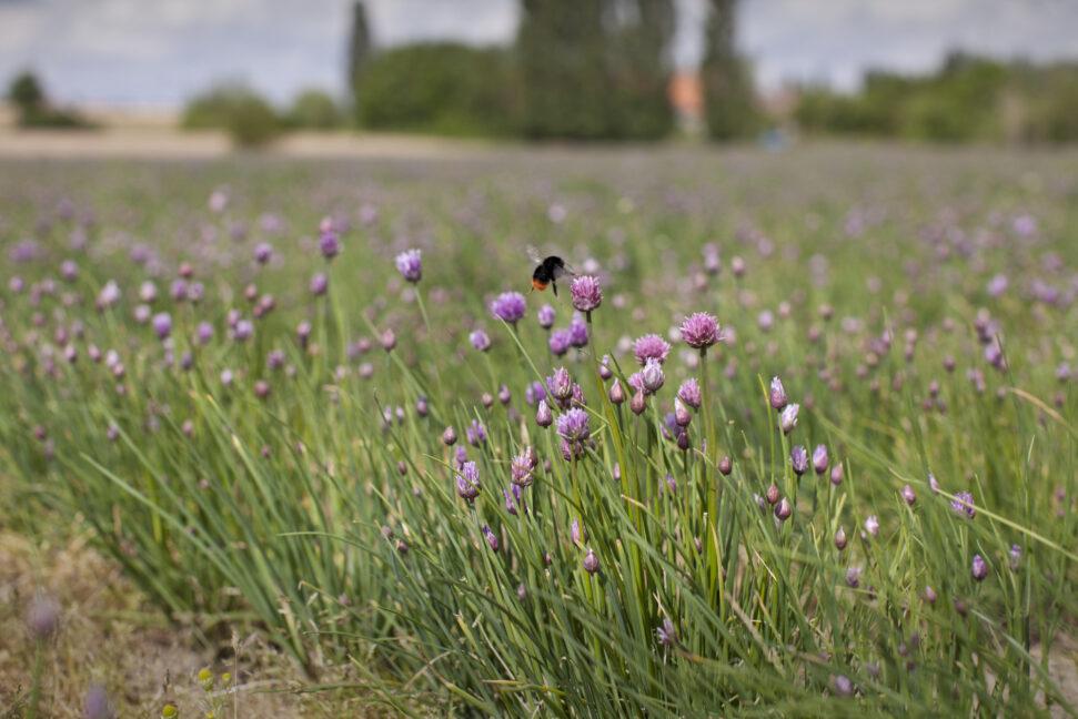 20210816 Rapport Ifoam Biodiversiteit