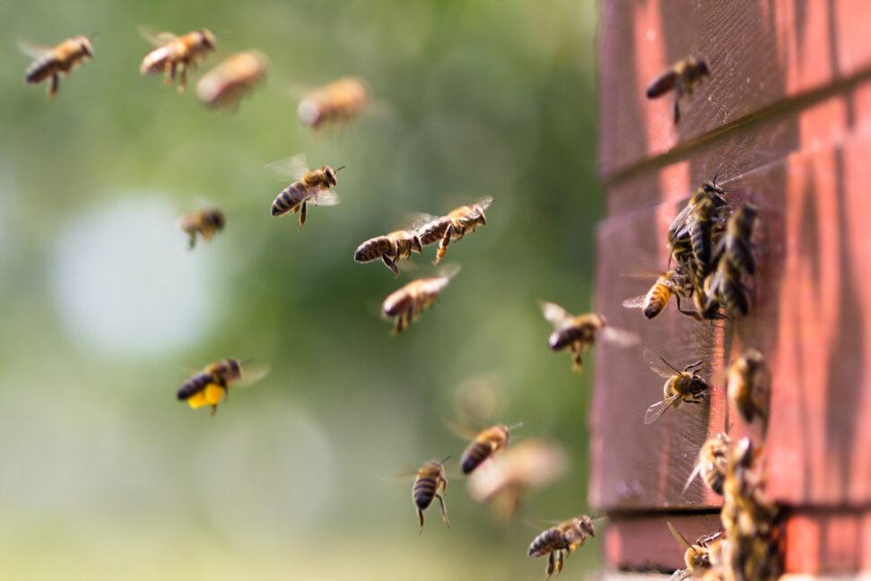 Petitie Bijen Boeren Kvl