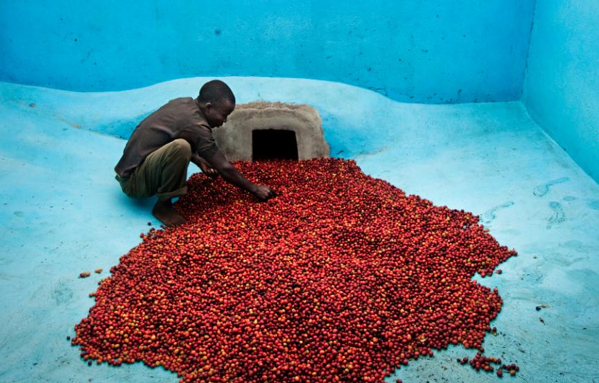 Oxfam3 Koffie